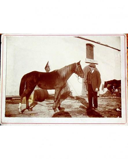 Homme en casquette debout présentant un cheval (Jean Amira)