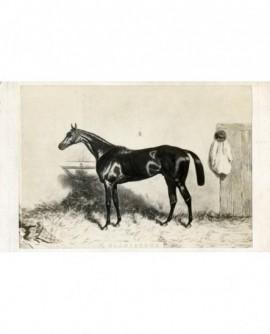 Peinture de Harry Hall : cheval de course, Gladiateur.
