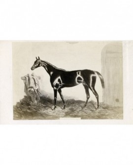 Peinture de Harry Hall : cheval de course ,Monarque.
