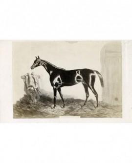 Peinture de Harry Hall : cheval de course ,Monarque.