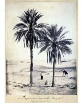 Vue prise dans l\'oasis d\'El Hadjra. Capitaine Piboul