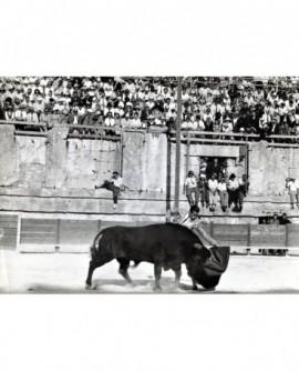 Toréador et un taureau dans une arène. Tauromachie