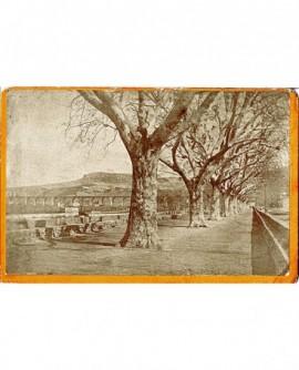 Allée d'arbres avec pont sur l'Hérault
