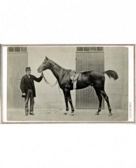 Homme présentant un cheval