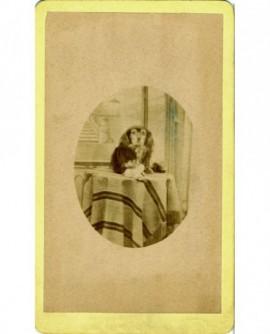 Portrait d'un chien assis sur une table