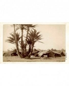 Vue d'Algérie. Tentes dans une oasis.