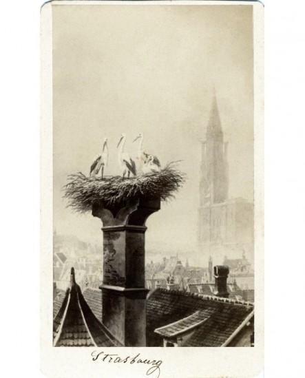 Cigognes dans un nid à Strasbourg