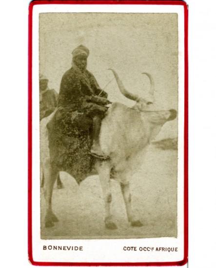 Portrait d'un Maure monté sur son boeuf (Sénégal)